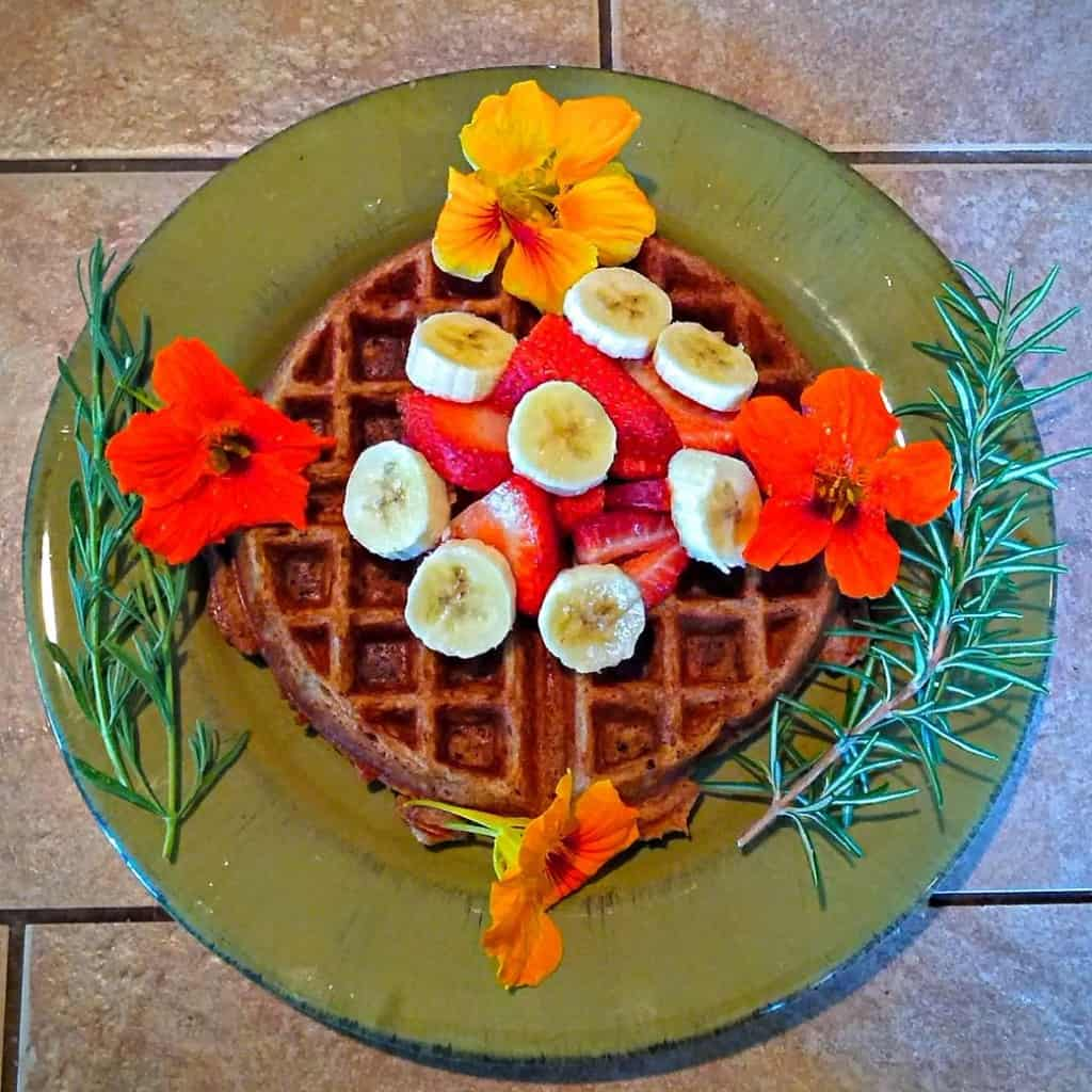 Yeast-Raised Vegan Waffle with Nasturtium Flowers and Rosemary Garnish, overhead view